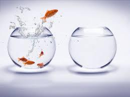 飽和していない金魚鉢への移動