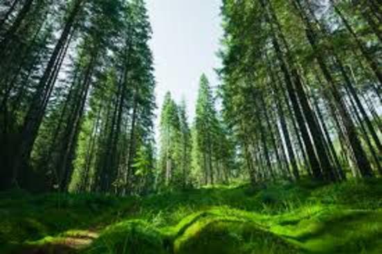 新Googlebot「evergreen」が搭載!変わるWEBページ