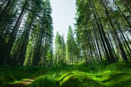 evergreen(エバーグリーン)